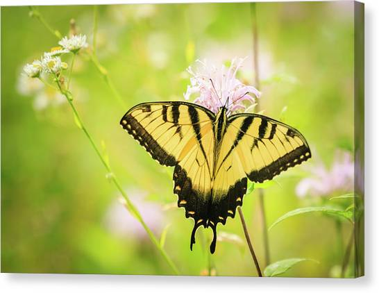 Series Of Yellow Swallowtail #6 Of 6 Canvas Print