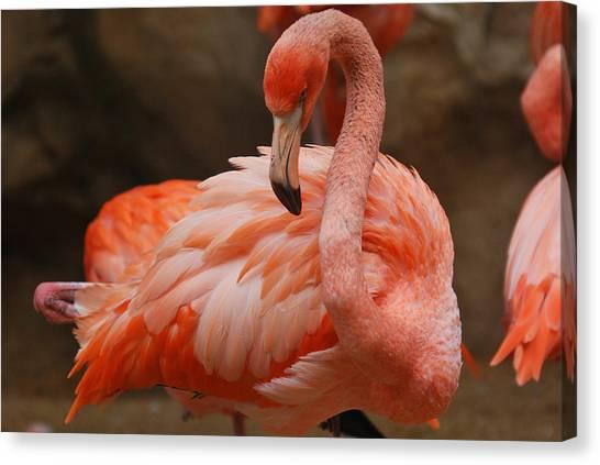 Serious Flamingo Canvas Print by Teresa Blanton