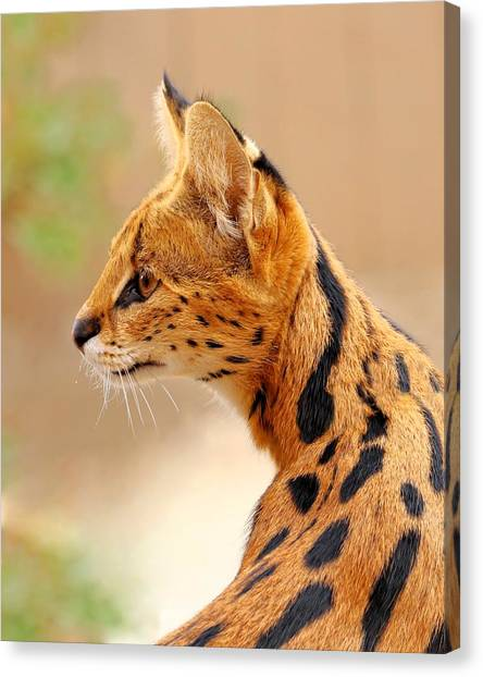 Serval - Extreme Hunter Canvas Print