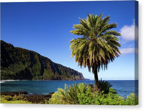 Kalaupapa Cliffs Canvas Print - Settlement by Marzena Grabczynska Lorenc