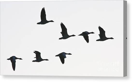 Sevenfold Geese Canvas Print