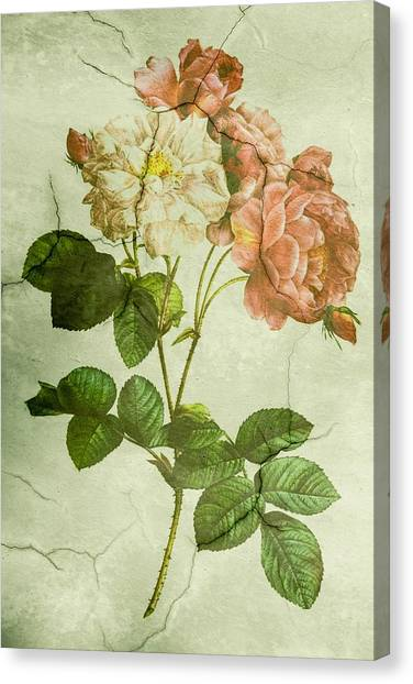 Shabby Chic Pink And White Peonies Canvas Print