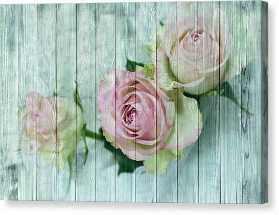 Shabby Chic Pink Roses On Blue Wood Canvas Print
