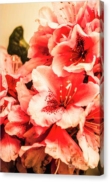 Summer Flowers Canvas Print - Shabby Chic Romances by Jorgo Photography - Wall Art Gallery