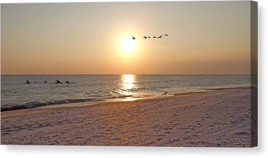 Bottlenose Dolphins Canvas Print - Shackleford Banks Sunset by Betsy Knapp