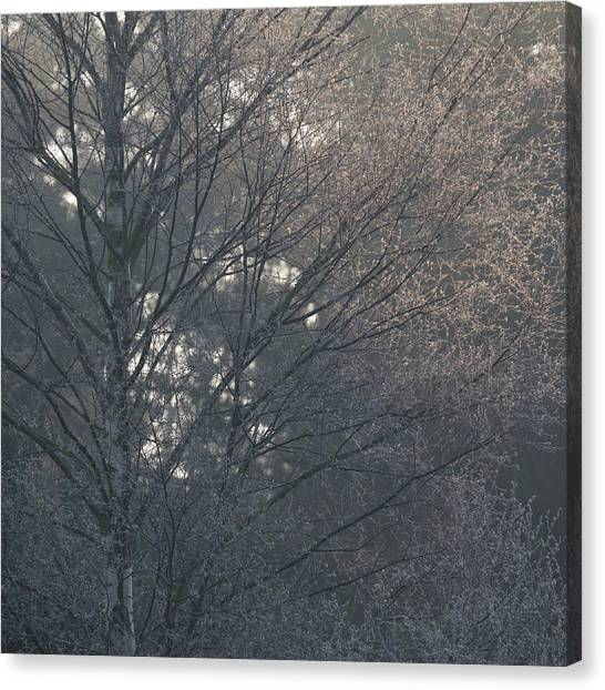 Sherwood Forest Canvas Print - Shade by Chris Dale