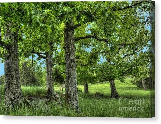 Shade Trees Canvas Print