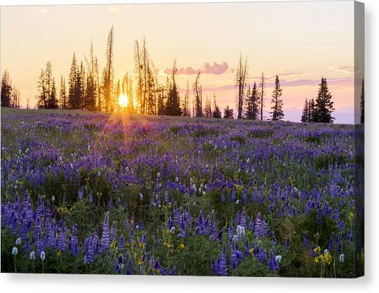 Uinta Canvas Print - Shades by Chad Dutson