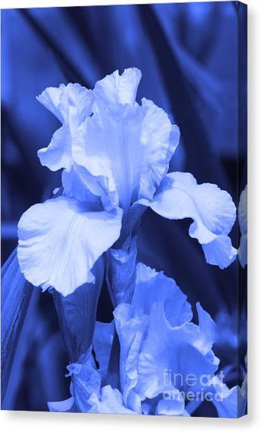 Shades Of Blue Iris  Canvas Print
