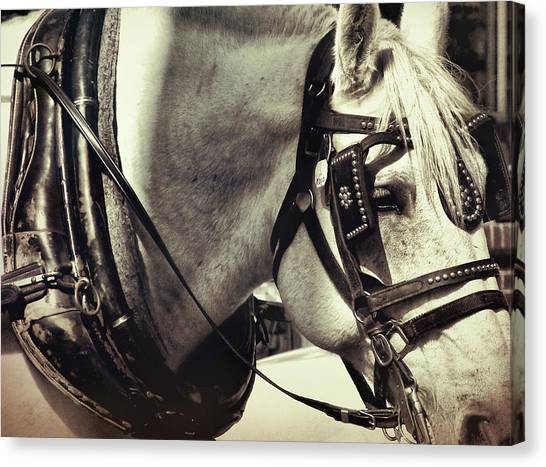 Shades Of Gray Canvas Print by Dressage Design