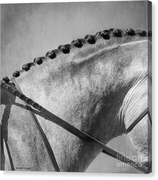 Shades Of Grey Fine Art Horse Photography Canvas Print