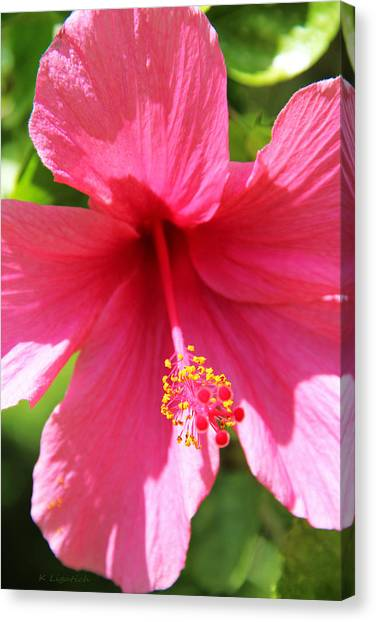 Shades Of Pink - Hibiscus Canvas Print