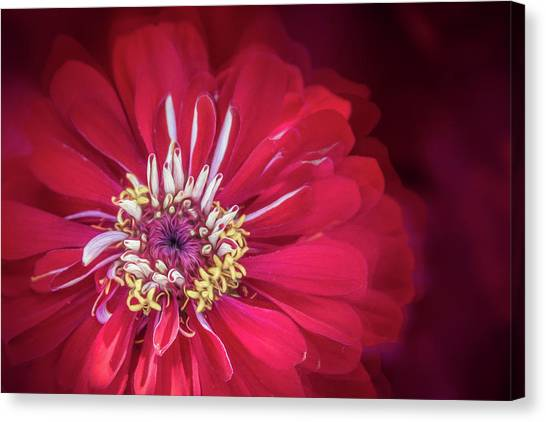 Shades Of Red Canvas Print