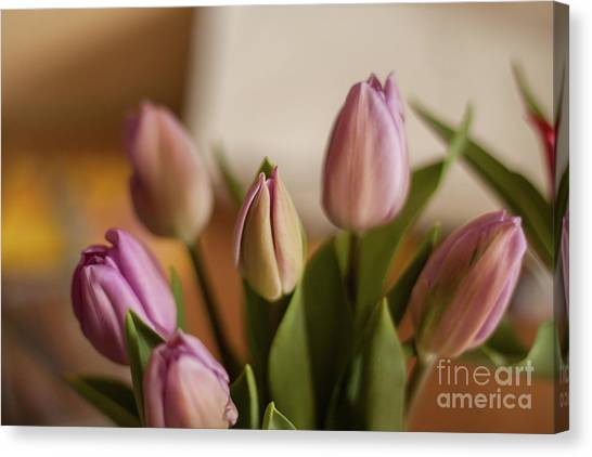 Canvas Print - Shades Of Spring by Jo Jackson