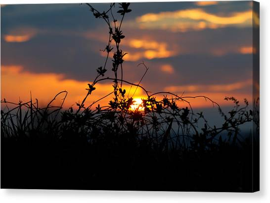Shades Of Sun Canvas Print