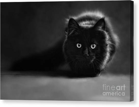 Shadow Cat 2 Canvas Print