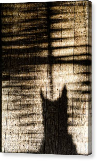 Shadow Cat Canvas Print