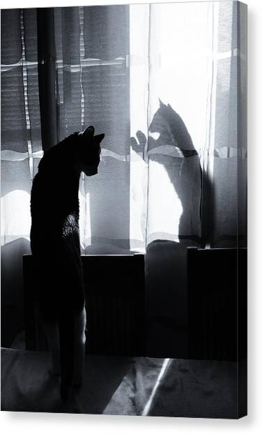 Kittens Canvas Print - Shadow Cats by Cambion Art