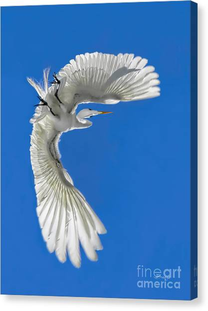 Shadow On A Wing Canvas Print