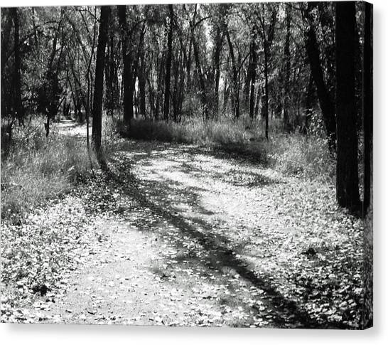 Shadow Path Canvas Print