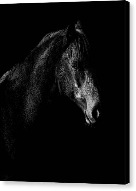 Ponies Canvas Print - Shadow by Paul Neville