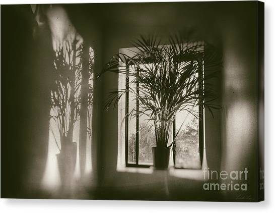 Shadows Dance Upon The Wall Canvas Print