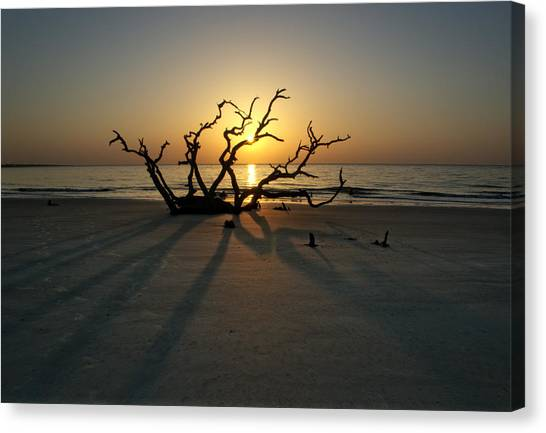 Shadows Of Driftwood Canvas Print