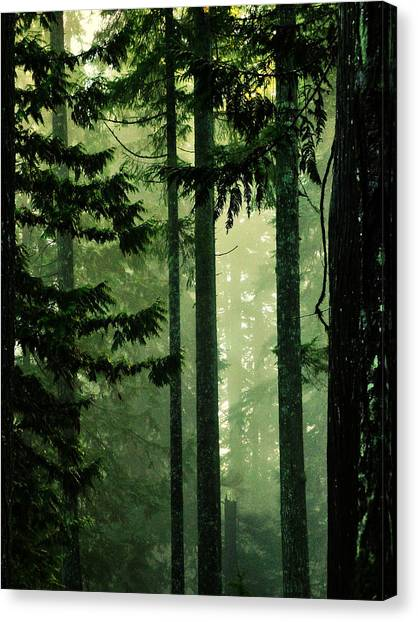 Shadows Of Light Canvas Print