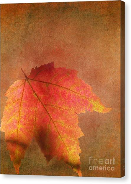 Shadows Over Maple Leaf Canvas Print