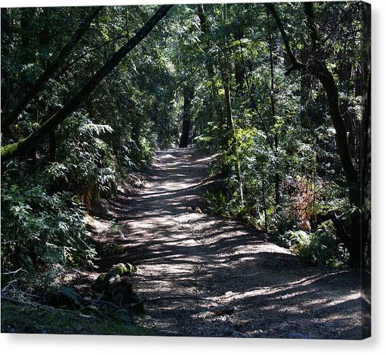 Canvas Print featuring the photograph Shady Road On Mt Tamalpais by Ben Upham III