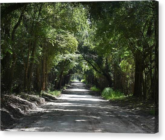 Shady Tree Lined Carpenter Road Canvas Print by rd Erickson