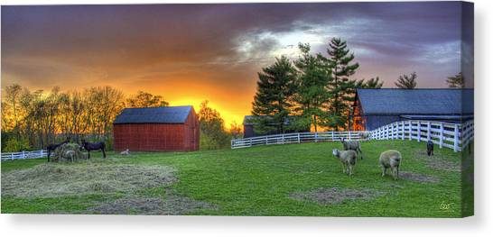 Shaker Animals At Sunset Canvas Print