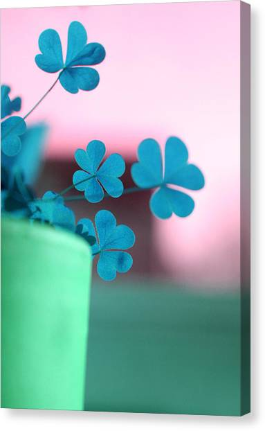Shamrock Pot V Canvas Print