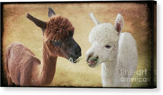 Sharing A Meal Canvas Print