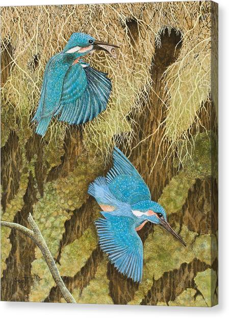 Kingfisher Canvas Print - Sharing The Caring by Pat Scott