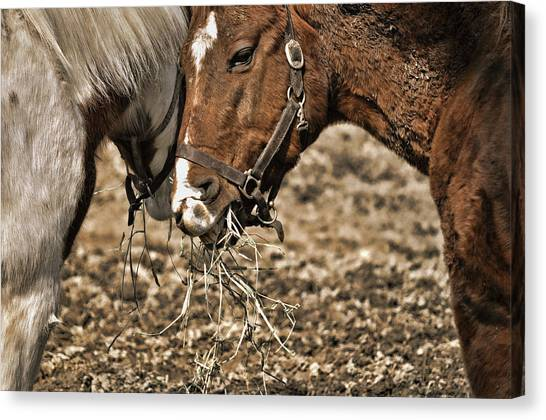 Sharing The Hay Canvas Print by JAMART Photography