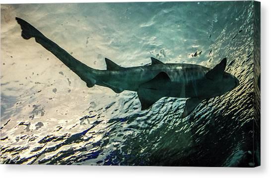 Shark Teeth Canvas Print - Shark Fins by Martin Newman