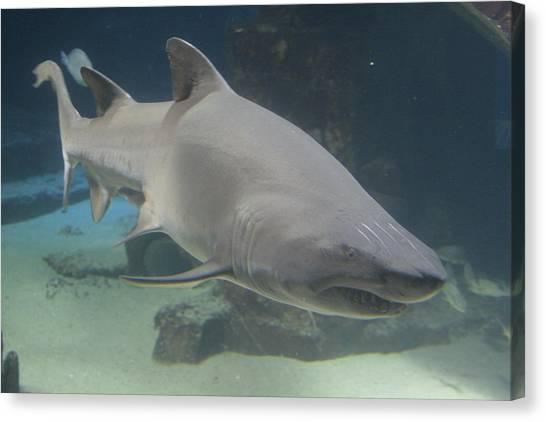 Shark Run Canvas Print