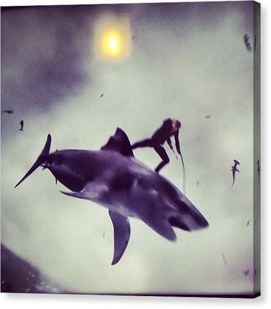 Reef Sharks Canvas Print - #sharknado #sharknado2 #bmovie #movie by Abdurrahman Ozlem