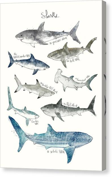 Tiger Sharks Canvas Print - Sharks by Amy Hamilton