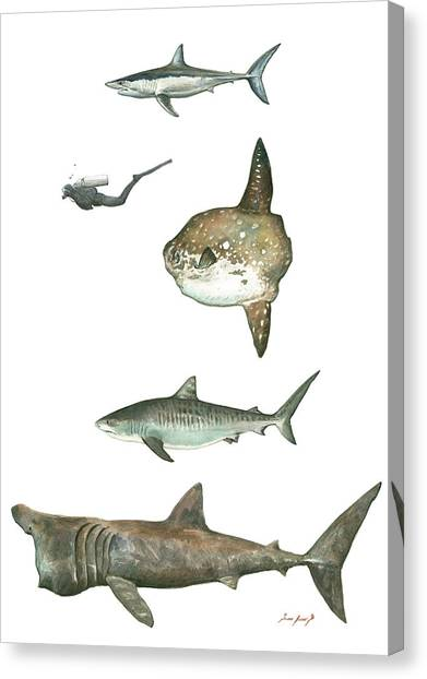 Tiger Sharks Canvas Print - Sharks And Mola Mola by Juan Bosco