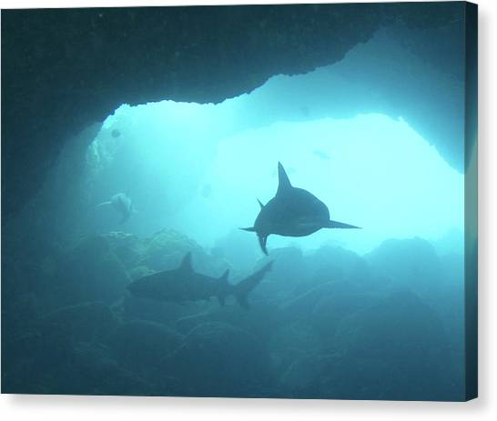 Underwater Caves Canvas Print - Sharks Circling In Cave by Chris Stankis