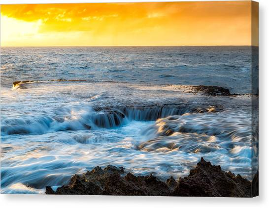 Hammerhead Sharks Canvas Print - Sharks Cove by Justin MacKenzie