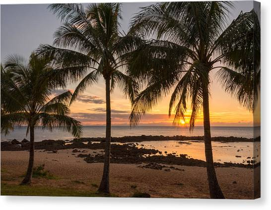 Palm Trees Sunsets Canvas Print - Sharks Cove Sunset 3 - Oahu Hawaii by Brian Harig