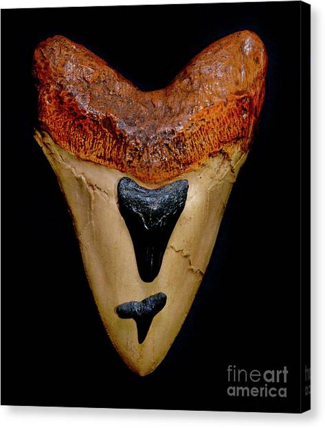 Shark Teeth Canvas Print - Sharks From 6 To 60 Foot by Paul W Faust - Impressions of Light