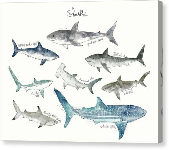 Tiger Sharks Canvas Print - Sharks - Landscape Format by Amy Hamilton