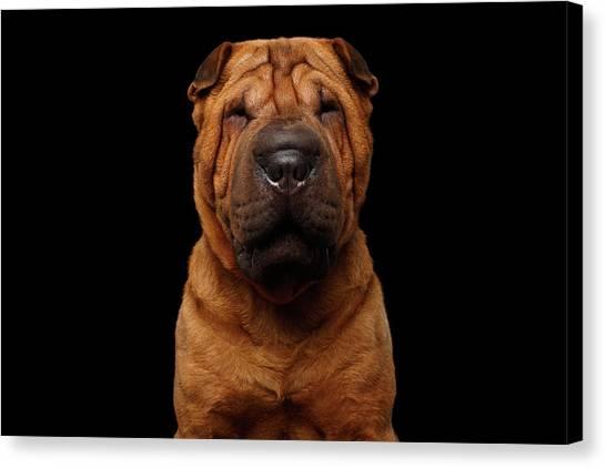 Sharpei Dog Isolated On Black Background Canvas Print