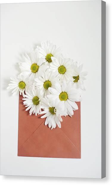 Shasta Daisies In Orange Envelope Canvas Print