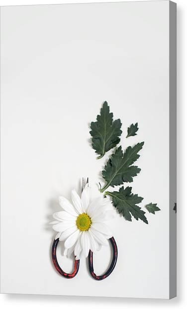Shasta Daisy Still Life Canvas Print
