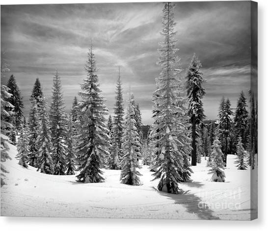 Shasta Snowtrees Canvas Print